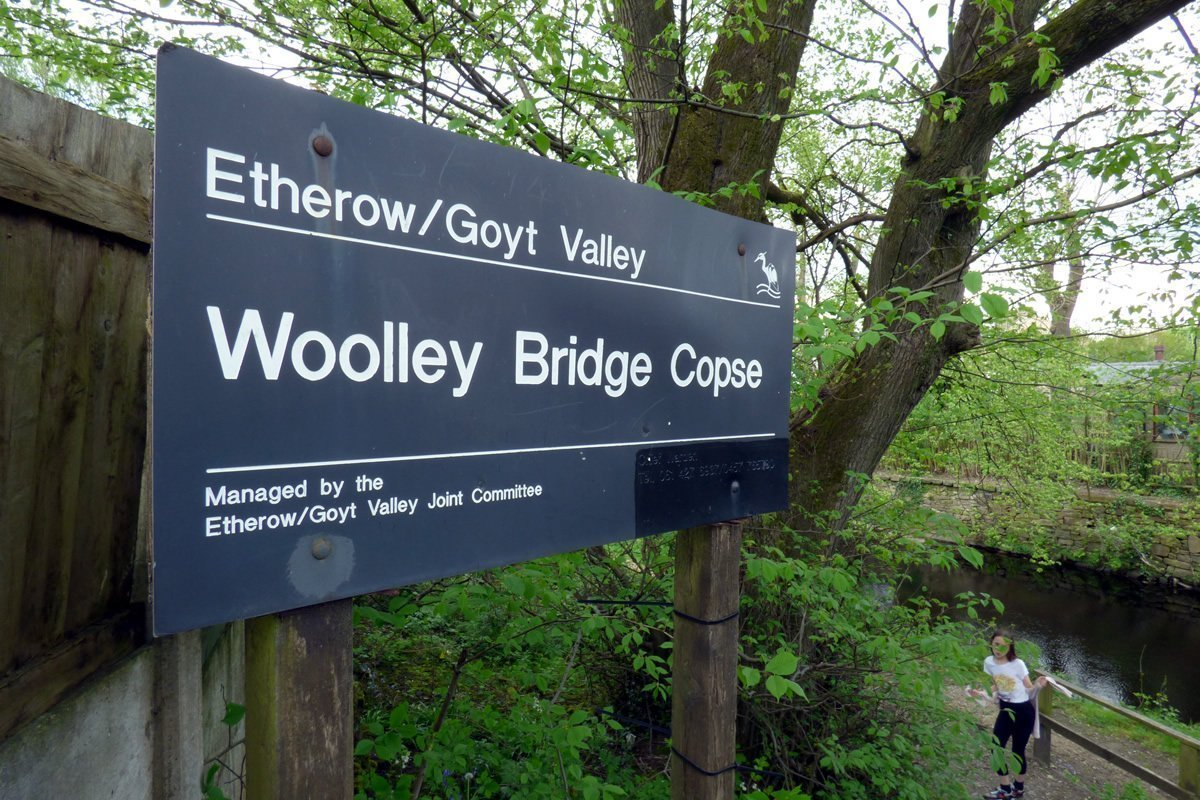 Woolley Bridge Copse