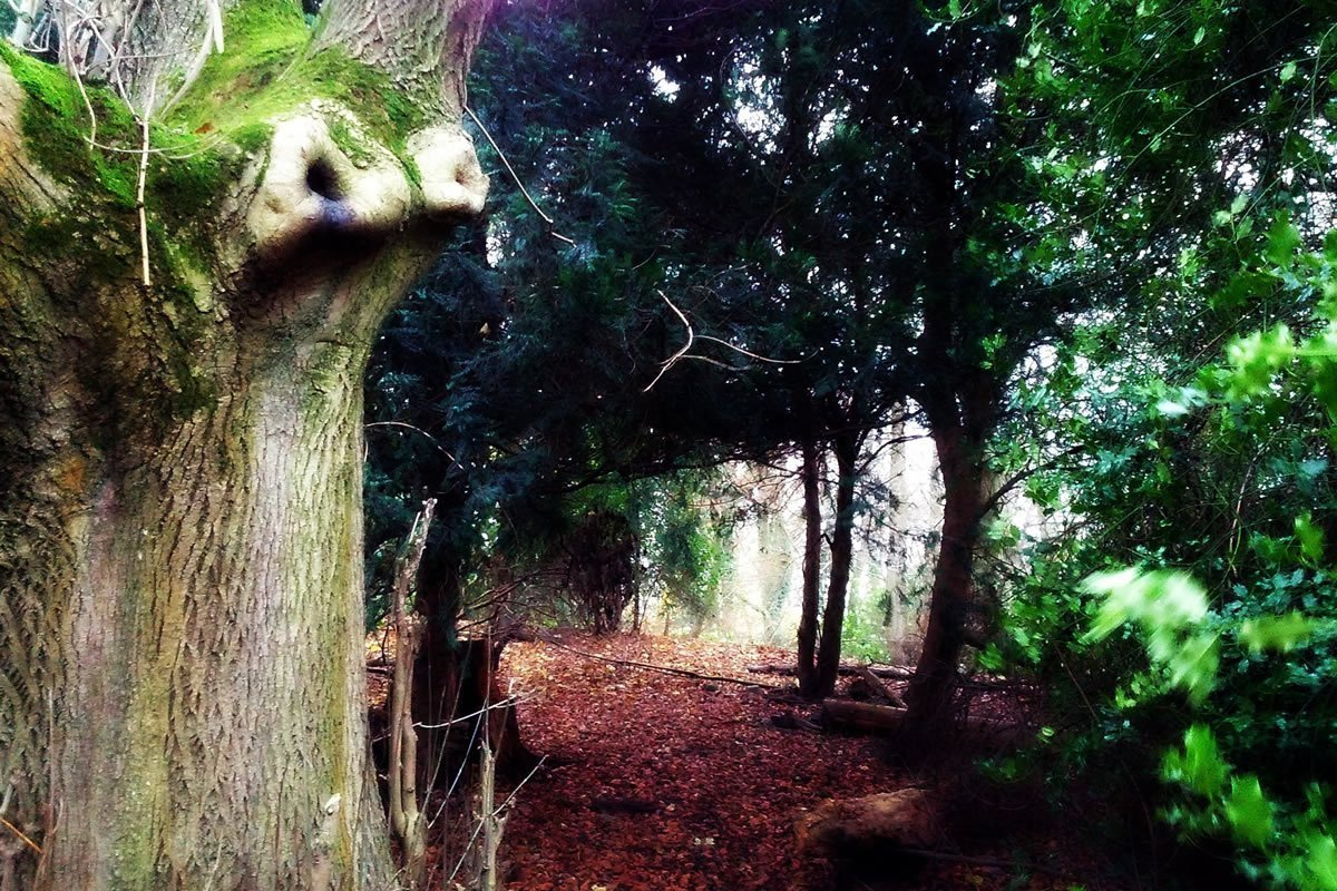 Etherow Lodge Park