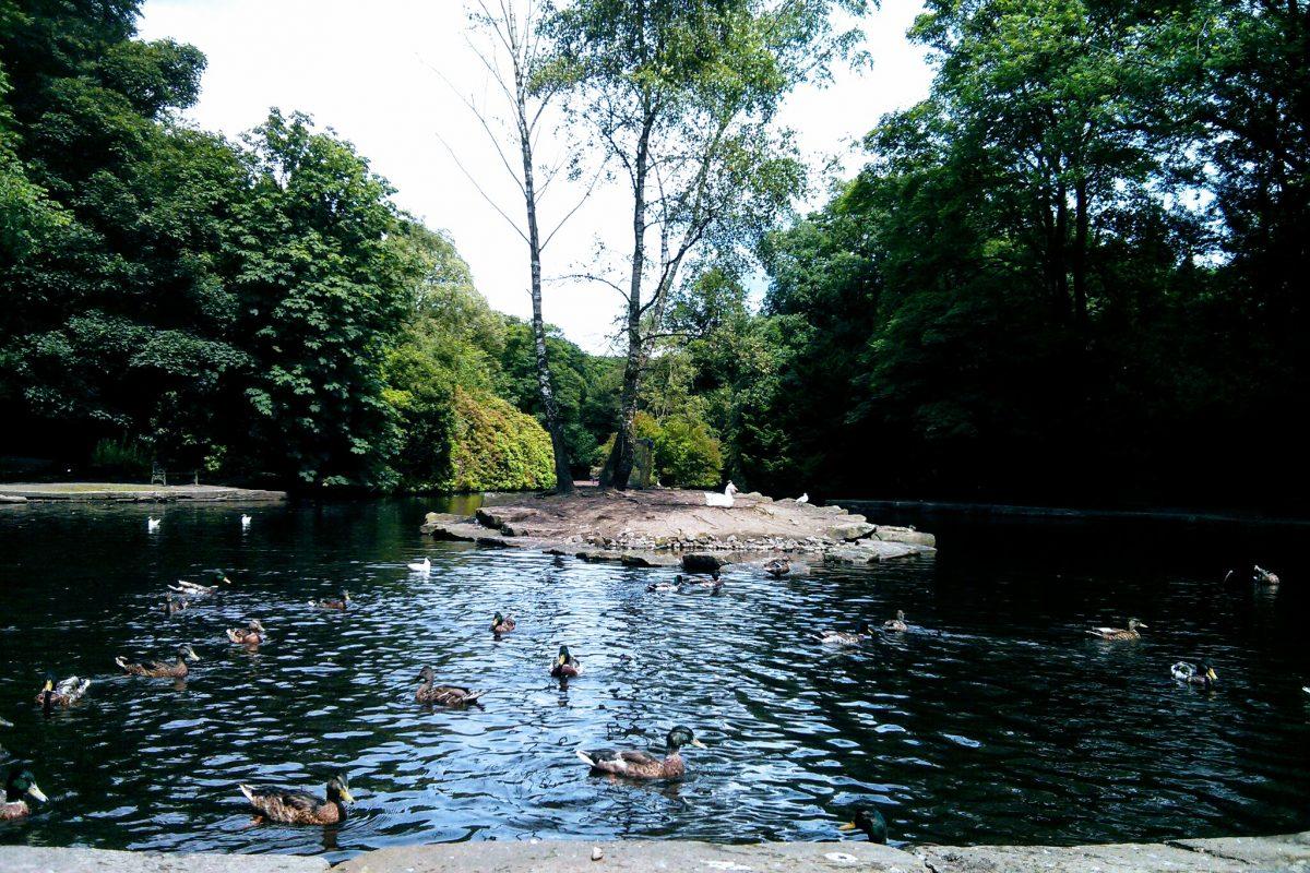 What a surprising gem! - Review of Manor Park, Glossop, England -  Tripadvisor